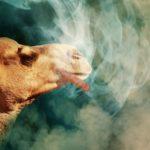 CBDリキッドの吸い方(使い方)の完全ガイド|コツ・注意点・楽しみ方