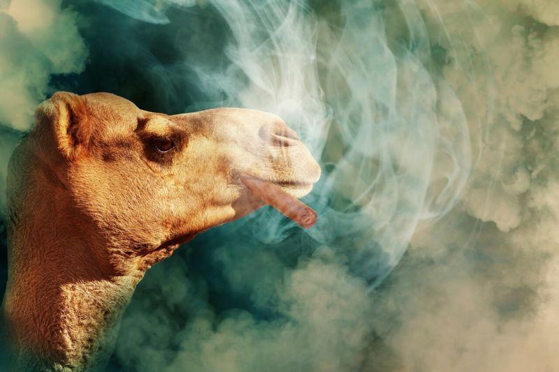 CBDリキッドの吸い方を完全解説します【吸い方のコツや注意点も】